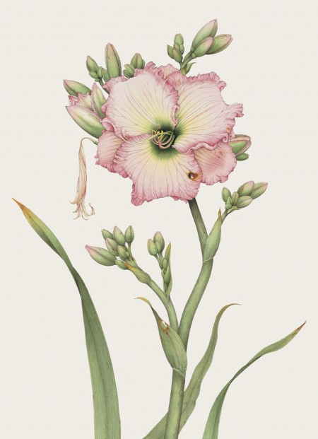 Day Lily (detail). Pen, ink, and watercolor. © Randy Hinz.