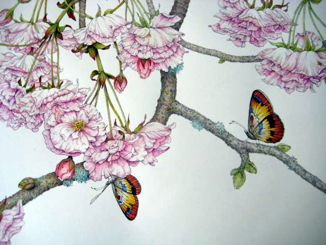 (SOLD) Japanese Cherry Blossom. Pen, ink, and watercolor. © Randy Hinz.